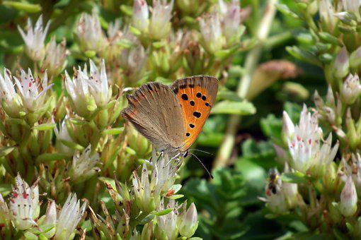 Butterfly, Insect, Flowers, Nature, Wings, Summer