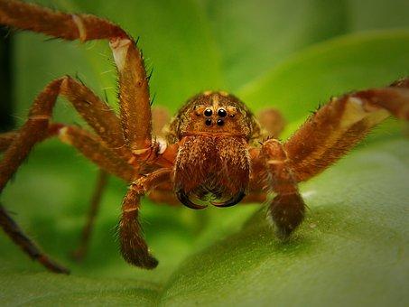 Spider, Web, Tarantula, Arachnid, Trap, Danger