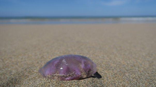 Jellyfish, Feuerqualle, Beach