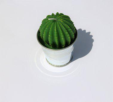 Cactus Candle, Candle, Green Cacti, Cactus In Plant Pot