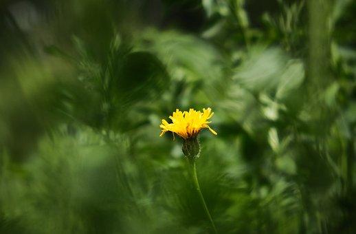 Flower, Focus, Yellow, Tiefenschärfe, Contrast, Center