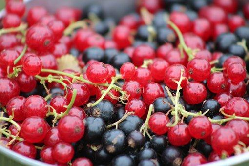 Currant, Fruit, Food, Vitamins, Delicious, Healthy