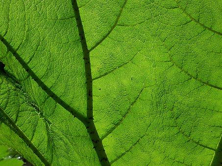 Leaf, Plant, Nature, Botany, Flora, Leaf Structure