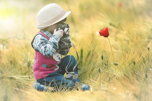 Flower, Field, Child, Photography, Poppy, Flash