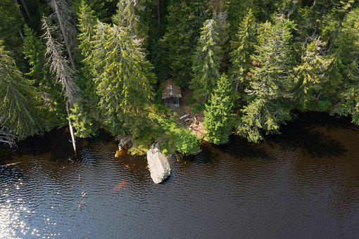 Hut, Lake, Haus Am See, Waldsee, Forest, Black Forest