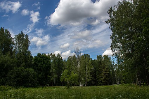 Forest, Trees, Park, Clouds, Sky, Grass, Meadow, Field