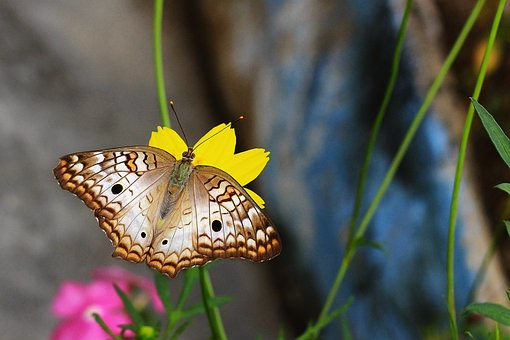 Butterfly, Flying Insect, Wings, Garden, Flowers