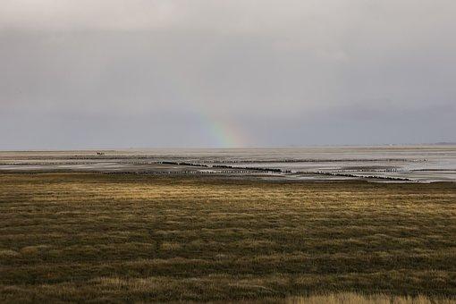 Germany, North Sea, Langeoog, Salt Marshes, Sea, Nature