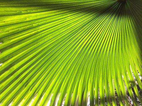 Plant, Subjects, Green, Leaf