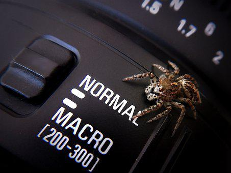 Spider, Macro Photography, Macro, Detail, Insect