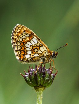 Butterfly, Nature, Insect, Animal, Flower, Love, Spring