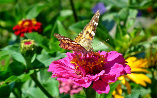 Butterfly, Insect, Flowers, Tin, Colorful, Nature