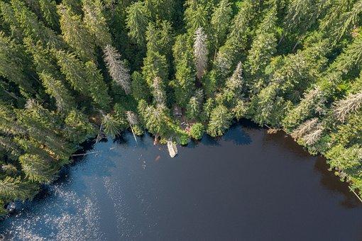 Forest, Trees, Lake, Waldsee, Brine, Landscape, Nature