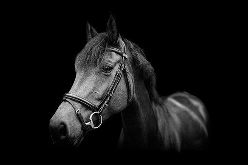Horse, Portrait, Animal, Pferdeportrait, Mammal, Mare