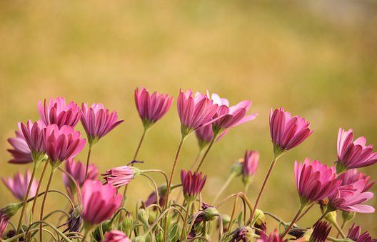 Flowers, Wild, Summer, Bloom, Nature, Color, Meadow