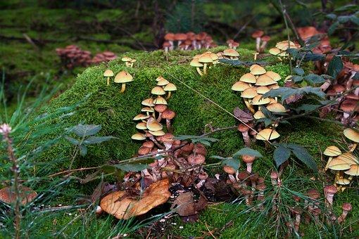 Mushrooms, Moss, Forest, Moist, Autumn, Nature