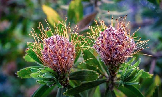 Plant, Blossom, Bloom, Bush, Nature, Summer, Flowers