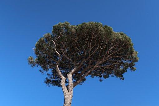 Tree, Palma, Crown, Capri, Italy, Nature, Plant, Blue
