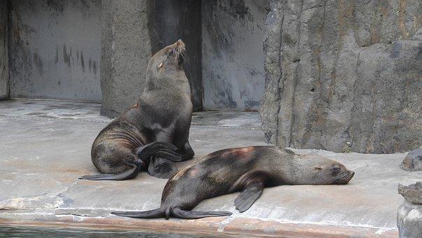 Sea Lions, Sea lion, Sea Lion At The Zoo