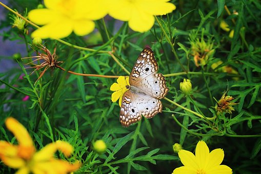 Butterfly, Flying Insect, Spring, Garden, Flying