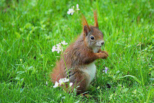The Squirrel, Rodent, Standing, Grass, Animal, Mammal