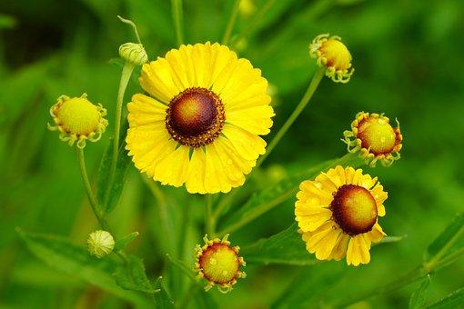 Flower, Summer, Yellow, Nature, Wild, Plants, Forest