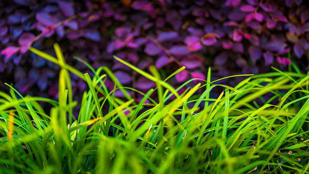 Vibrant, Colorful, Abstract, Daylight, Grass