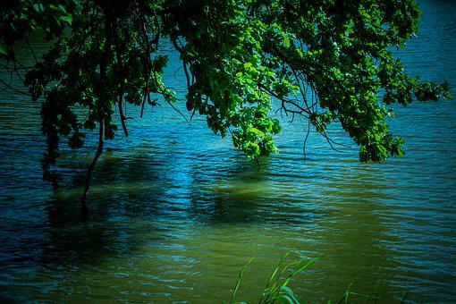 Still Life, Lake, Water, Nature, Blue, Branches