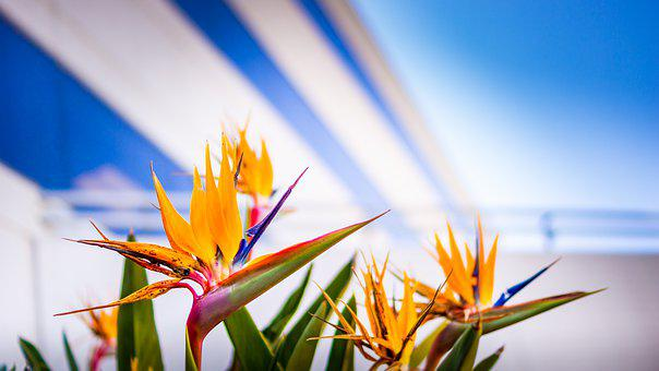 Bird Of Paradise, Architectural, Vibrant, Bright