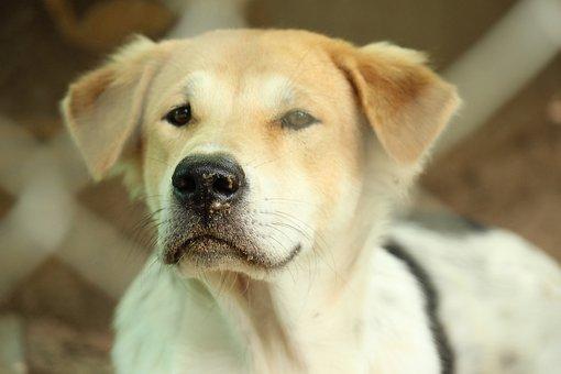 Black Nose, Brown Eyes, Brown Hair, Dog Outdoor
