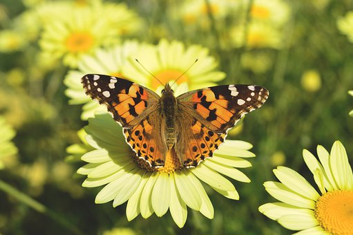 Nature, Butterfly, Flower, Insect, Animal World