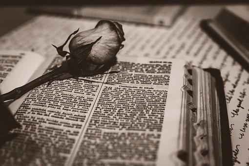 Bible, Rosa, Church, Scriptures