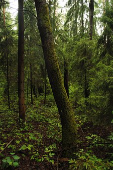 Foliage, Forest, Forests, Trees, Nature, Landscape