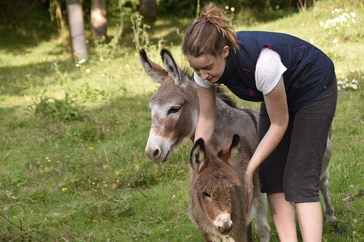 Girl And Donkey, Donkey Donkey, Miniature Donkeys