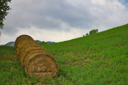 Hay, Bales, Agriculture, Summer, Field, Landscape