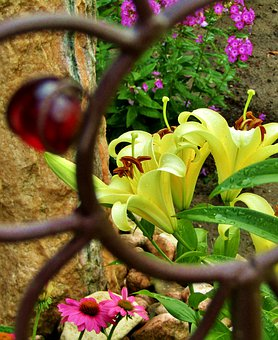 Lilies, Yellow, Blossom, Bloom, Frame, Metal, Close Up