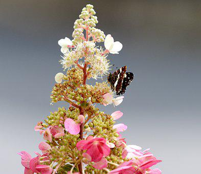 Butterfly, Bug, Animal, Flower, Wing, Summer, Nature
