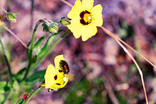 Flower, Nature, Summer, Closeup, The Petals, Plants