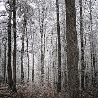 Forest, Trees, Winter, Frost, Fall, Fog, Nature, Trail