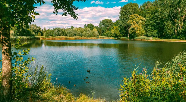 Park, View, Landscape, Nature, Summer, Water, Tree