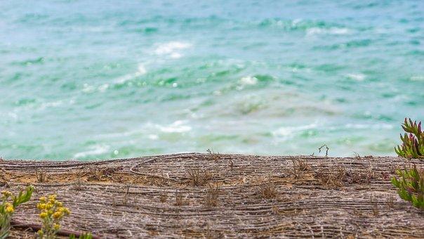 Vibrant, Colorful, Abstract, Ocean, Beach, Plants, Sea