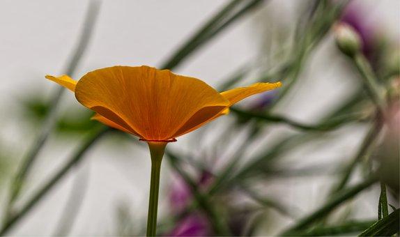 Yellow, Flower, Summer, Nature, Garden, Plant, Flora