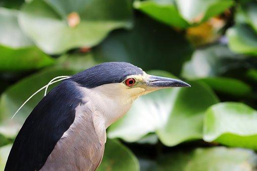 Egrets, New, Birds, Animal, Nature, Beautiful, Pond