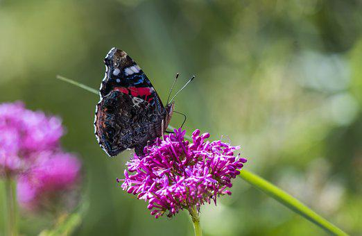 Butterfly, Nature, Spring, Flower, Flowers, Colorful