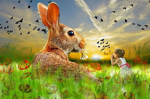 Sunset, Rabbit, Sun, Nature, Grass, Design, Landscape