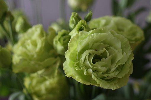 Flowers, Bouquet, Color, Green, Beauty, The Petals