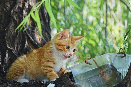 Cat, Kitten, Tree, Green, Natural, Leaf, Summer