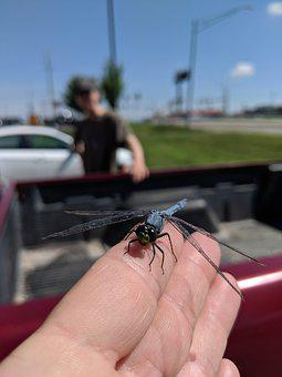 Dragonfly, Insect, Hunter, Hand, Summer, Nature, Wing