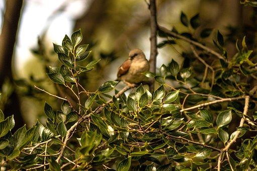 Bird, Swallow, Swallows, Animal, Nature, Peace