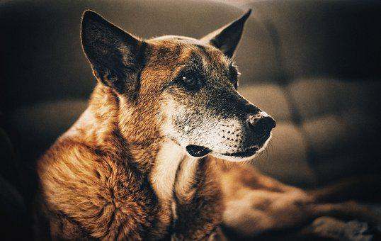 Dog, Doggy, Nice, Portrait, Animal, Pet, Coat, Mammal